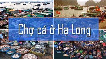 Top 6 chợ Hạ Long bán hải sản chất lượng giá rẻ nhất